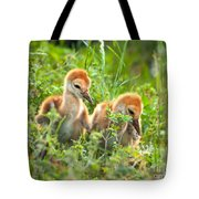 Two Sandhill Crane Chicks Tote Bag