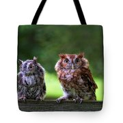 Two Screech Owls Tote Bag