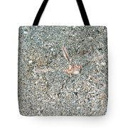 Two-spined Sea Star Tote Bag