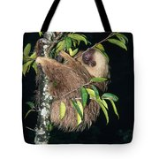 Two-toed Sloth Choloepus Didactylus Tote Bag