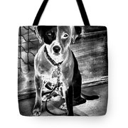 Two Tone Toby-jack Russell Tote Bag