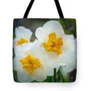 Two-toned Daffodils Tote Bag