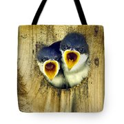 Two Tree Swallow Chicks Tote Bag