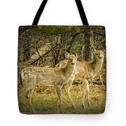 Two White Tailed Deer Tote Bag