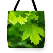 Under The Maple Leaves - Featured 2 Tote Bag