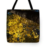 Under The Trees - Lambton Woods Toronto Canada Tote Bag