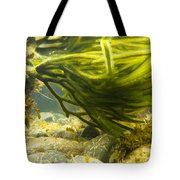 Underwater Shot Of Green Seaweed Attached To Rock Tote Bag