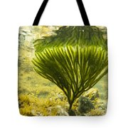Underwater Shot Of Seaweed Plant Surface Reflected Tote Bag