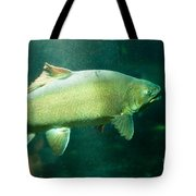 Underwater Shot Of Trophy Sized Tiger Trout Tote Bag