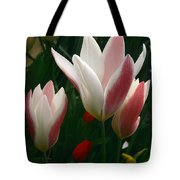 Unfolding Tulips Tote Bag