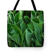 Unfurling Of The Hosta Tote Bag