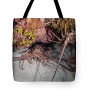 Up And Down Lobster Tote Bag