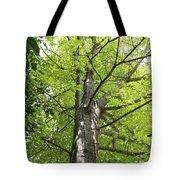 Up The Oak Tree Tote Bag