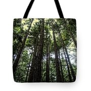 Up Through The Trees Tote Bag