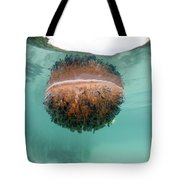 Upside-down Jellyfish Cassiopea Tote Bag