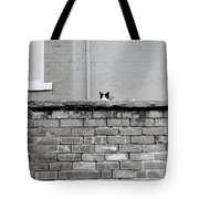 Curiosity Of The Cat Tote Bag