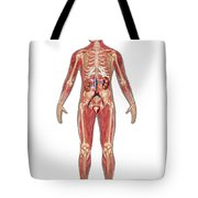 Urinary, Skeletal & Muscular Systems Tote Bag