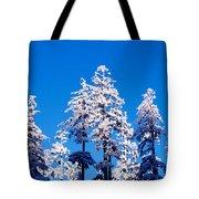 Usa, Oregon, Pine Trees, Winter Tote Bag