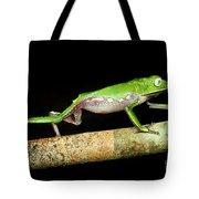 Vaillantis Monkey Frog Tote Bag