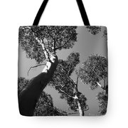 Valley Of The Giant Tingles Bw Tote Bag
