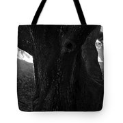 Valley Of The Oak Tote Bag