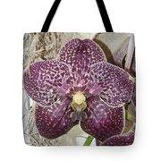 Vanda Robert's Delight Tote Bag