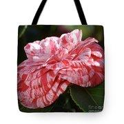 Variegated Camellia Tote Bag