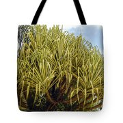 Variegated Screw Pine Tote Bag