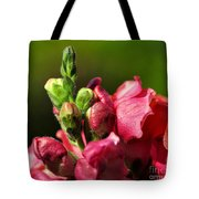 Variegated Snapdragon Tote Bag