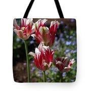 Variegated Tulips Tote Bag