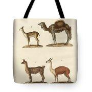 Various Camels Tote Bag