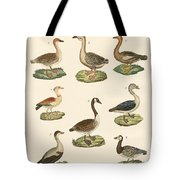 Various Kinds Of Geese Tote Bag