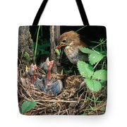 Veery At Nest Tote Bag