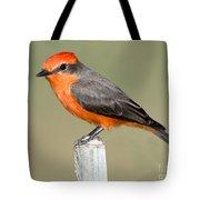 Vermilion Flycatcher Pyrocephalus Tote Bag