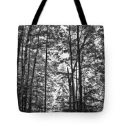 Vermont Forest Sunrise Ricker Pond Black And White Tote Bag
