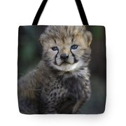 Very Young Cheetah Cub Maasai Mara Tote Bag by Suzi Eszterhas