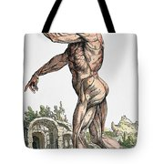 Vesalius: Muscles 02, 1543 Tote Bag