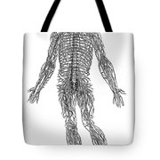 Vesalius: Nerves, 1543 Tote Bag