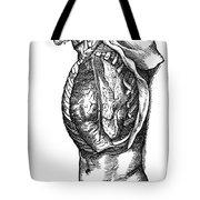 Vesalius: Thoracic Cavity Tote Bag