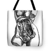Vesalius: Urogenital Tote Bag