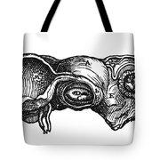 Vesalius: Uterus, 1543 Tote Bag