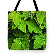 Vibrant Young Maples - Acer Tote Bag