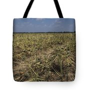 Vidalia Georgia Onion Fields Tote Bag