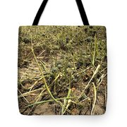 Vidalia Onion Seed Field - Georgia Tote Bag