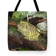 Vietnamese Mossy Frog Tote Bag