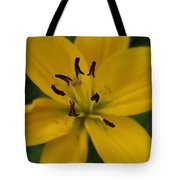 View From Above Tote Bag