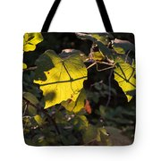 Vine Leaves At Sunset Tote Bag