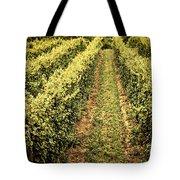Vines Growing In Vineyard Tote Bag