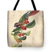 Vintage Bird Study-h Tote Bag