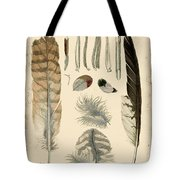 Vintage Feather Study-a Tote Bag